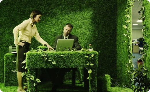 10 кращих рослин для офісу - квіти на робочому місці, які приносять користь