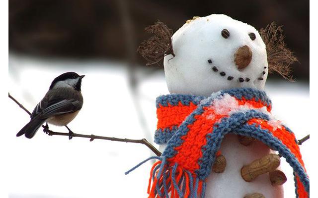 10 найкращих ігор взимку на свіжому повітрі - творчість і зимовий фітнес