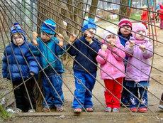Адаптаційний період в дитячому садку