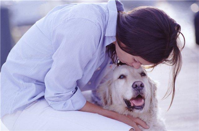 Що робити, якщо у собаки гнояться очі? Причини, лікування та основи першої допомоги