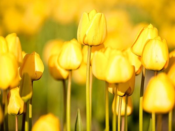 Що означає жовтий колір?