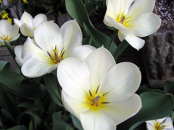 Квіти білого кольору. Назви, описи та фотографії білих квітів