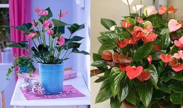 Квіти рожевого кольору: які вибрати для саду? Рожевий колір квітів: значення і символіка