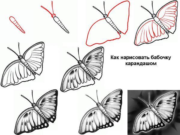 Як намалювати метелика? Прості поради для початківців