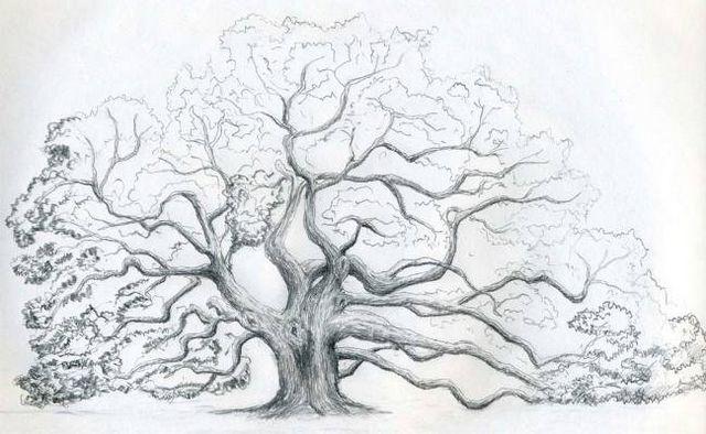 Як намалювати дерево: покрокові поради