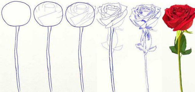 Як поетапно намалювати троянду? Проста техніка малюнка троянди олівцем