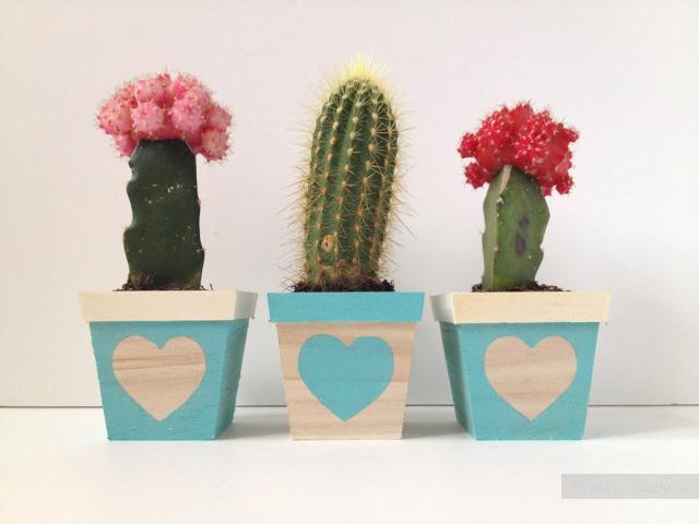 Як правильно поливати кактуси?