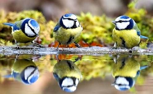 Годуєте птахів - робіть добро