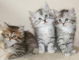 Кішка в будинку - як правильно виховати домашнього улюбленця