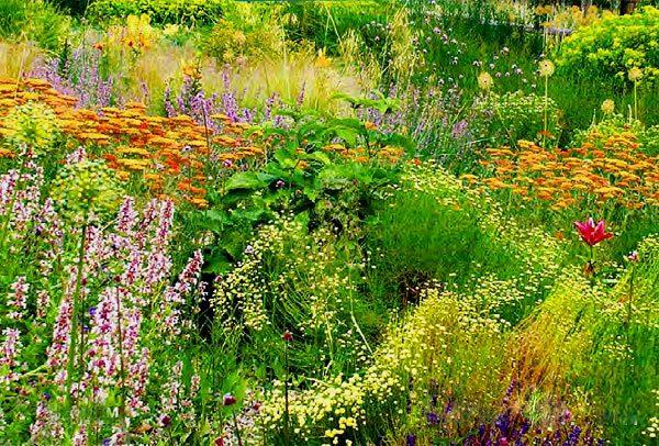 Невибагливі квіти для дачі. Прекрасна клумба кожен сезон!