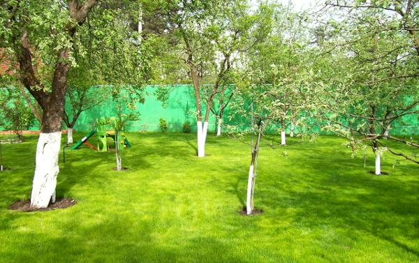 Обробка саду від шкідників навесні. Основні способи