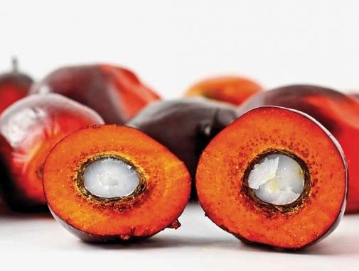 Користь і шкода пальмового масла