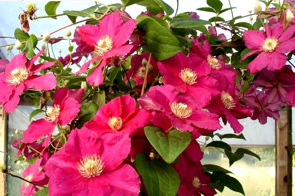 Садові квіти багаторічники. Сорти та способи вирощування