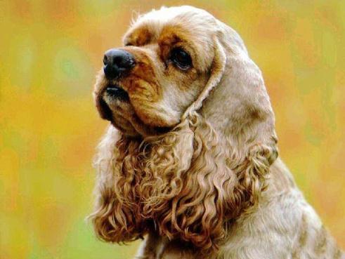 Собака в будинку: плюси і мінуси