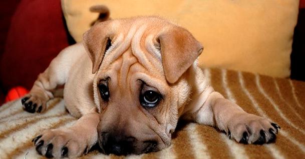 У собаки понос: що потрібно робити в першу чергу?
